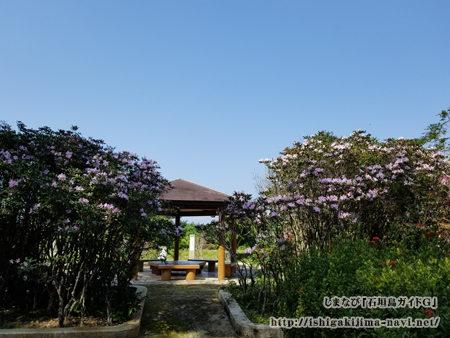 バンナ公園 セイシカの花スポット