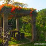 バンナ公園スポット「カエンカズラに癒される休憩所」