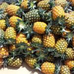 果汁たっぷり!石垣島パイナップル ハワイ種パイン